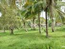 Sri Lanka Classifieds land for immediate sell in kosgama