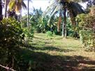 Sri Lanka Classifieds urgent for sale this land